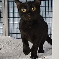 Adopt A Pet :: Jasmine - Maryville, IL