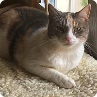 Adopt A Pet :: Chirp - Glen Mills, PA