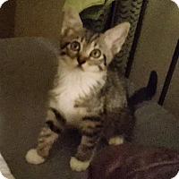 Adopt A Pet :: Kimba - Burbank, CA