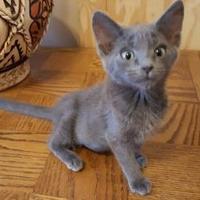 Adopt A Pet :: CUPCAKE - Mesa, AZ