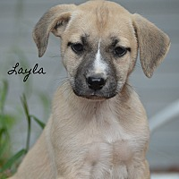 Adopt A Pet :: Layla~adopted! - Southbury, CT