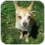 Photo 3 - Chihuahua Dog for adoption in Milwaukee, Wisconsin - Brownie