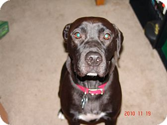 Labrador Retriever Mix Dog for adoption in Georgetown, Kentucky - Molly