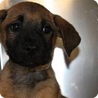 Adopt A Pet :: Jules - Marlton, NJ