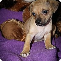 Adopt A Pet :: Tawny - Broomfield, CO