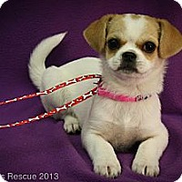 Adopt A Pet :: Desire - Broomfield, CO