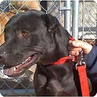 Adopt A Pet :: Brooklyn - Scottsdale, AZ