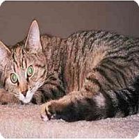 Adopt A Pet :: LAP CAT Ginger - cincinnati, OH