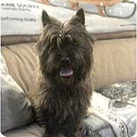 Adopt A Pet :: Napoleon - Douglas, MA