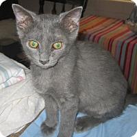 Adopt A Pet :: Treasure - Chandler, AZ