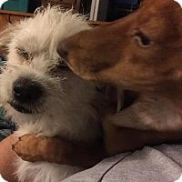Adopt A Pet :: Caesar - Phoenix, AZ