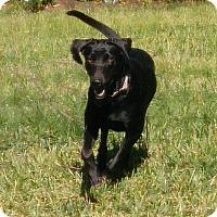 Adopt A Pet :: Ellie - Adopted! - Croydon, NH