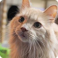 Adopt A Pet :: Jake - Carlisle, PA