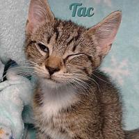 Adopt A Pet :: Tac - Harrisville, WV