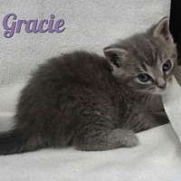 Adopt A Pet :: Gracie - Harrisville, WV
