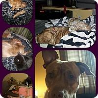 Adopt A Pet :: Marley - Baltimore, MD