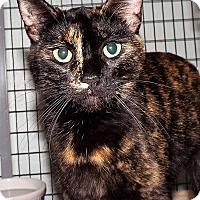 Adopt A Pet :: Andromeda - Grants Pass, OR