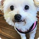 Adopt A Pet :: Princess1