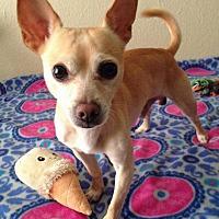 Adopt A Pet :: Chance - Houston, TX