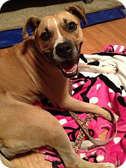 Boxer/Pit Bull Terrier Mix Dog for adoption in Ennis, Texas - Nava