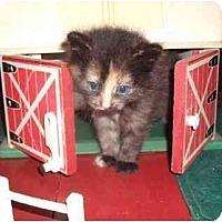 Domestic Shorthair Cat for adoption in Eldora, Iowa - farm kitties