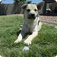 Adopt A Pet :: Alma - Only $95 adoption! - Litchfield Park, AZ