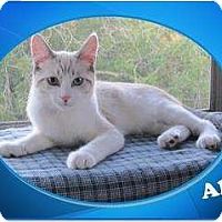 Adopt A Pet :: Alex - Encinitas, CA