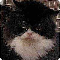 Adopt A Pet :: Stanton - Davis, CA