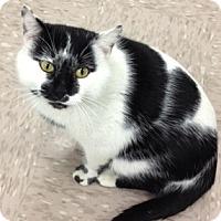 Adopt A Pet :: Desperado - Byron Center, MI