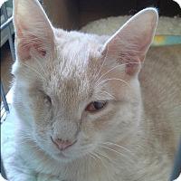 Adopt A Pet :: Butterfinger - Raritan, NJ