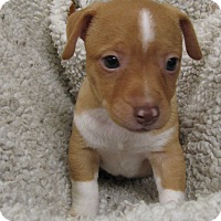 Adopt A Pet :: Buffalo Bill - South Dennis, MA