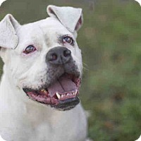 Adopt A Pet :: A1385156 is at North Central - Beverly Hills, CA