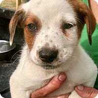 Adopt A Pet :: Mia - Quinlan, TX