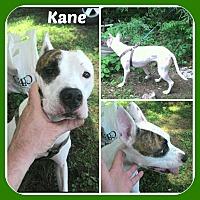Adopt A Pet :: KANE - Malvern, AR