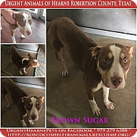 Adopt A Pet :: Brown Sugar - Hearne, TX
