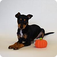 Adopt A Pet :: KENO - New Iberia, LA