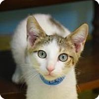 Adopt A Pet :: Chili - Dallas, TX