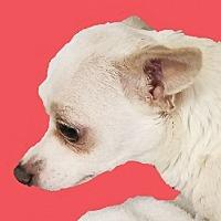 Adopt A Pet :: Cokey - Lexington, KY
