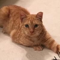 Adopt A Pet :: Oscarita - Suwanee, GA