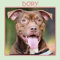 Adopt A Pet :: DORY - Dallas, NC