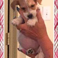 Adopt A Pet :: Aspen - Ringwood, NJ