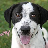 Adopt A Pet :: Harmony - Joliet, IL
