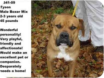 Boxer Mix Dog for adoption in Zanesville, Ohio - # 341-09 - ADOPTED!