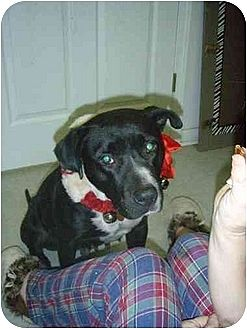 American Staffordshire Terrier Mix Dog for adoption in Longs, South Carolina - Maggie Mae