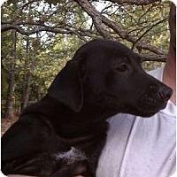 Adopt A Pet :: Bo - Salem, NH