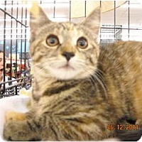 Adopt A Pet :: Colleen - Riverside, RI