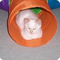 Adopt A Pet :: Robin - Richmond, VA