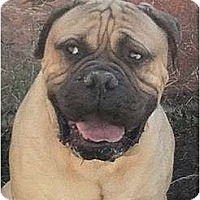 Adopt A Pet :: EBear - Phoenix, AZ