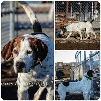 Hound (Unknown Type) Mix Dog for adoption in Yreka, California - Rufus