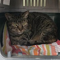Adopt A Pet :: Jenny - Monroe, LA